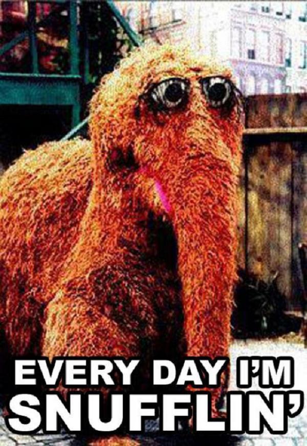 Funny Meme Everyday : Sesame street meme