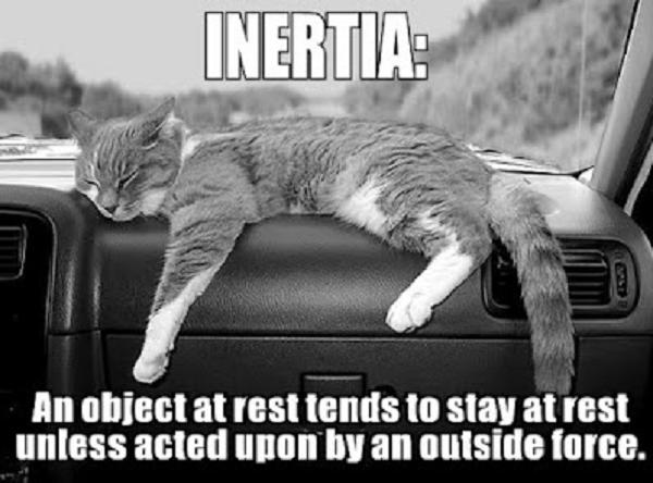 Inertia Cat