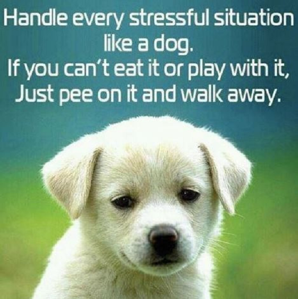 How to handle stress like a dog lol