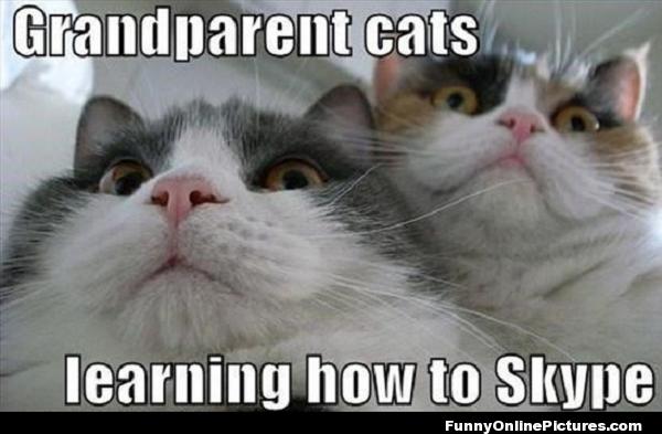 grandarent cats