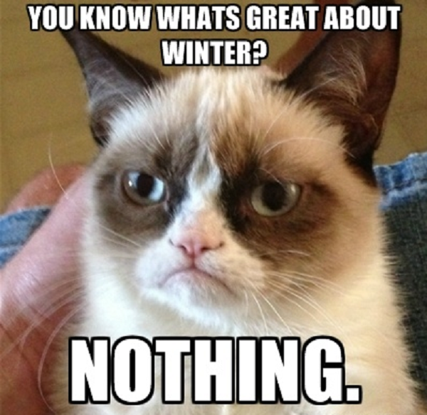 grumpy cat hates winter