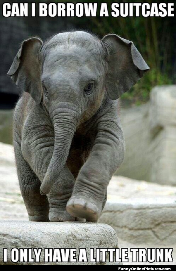 Funny meme picture of a cute baby elephant