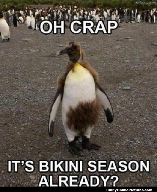 Funny animal meme picture of a penguin for forgot about bikini season