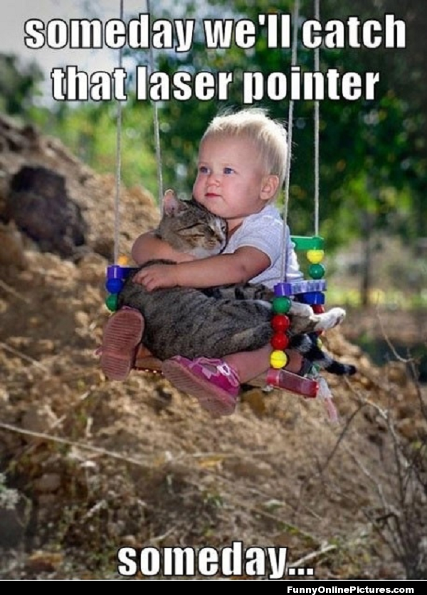 catch that laser pointer