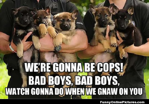 pics photos   friday funny police dogs