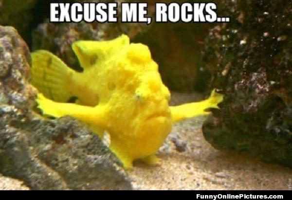 Excuse me, rocks