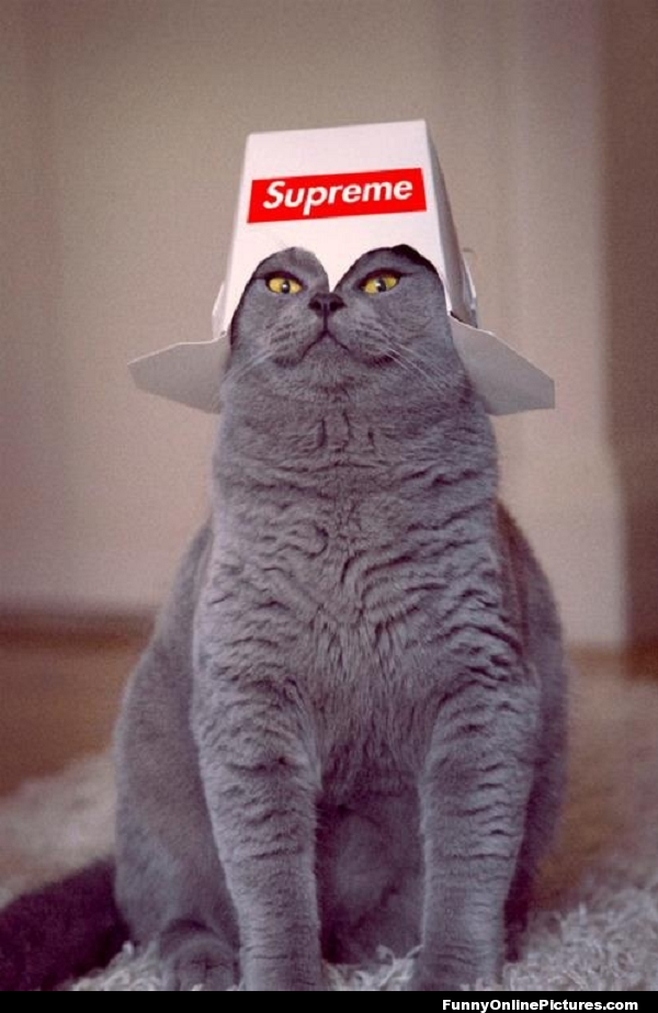Supreme Kitty