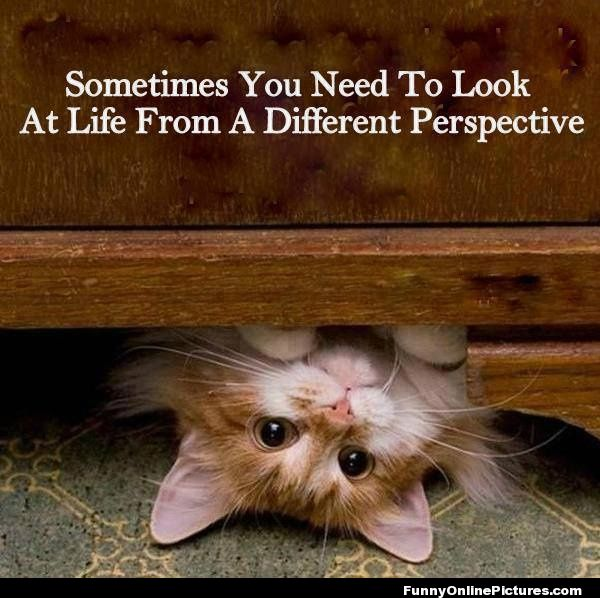 Different Perspective