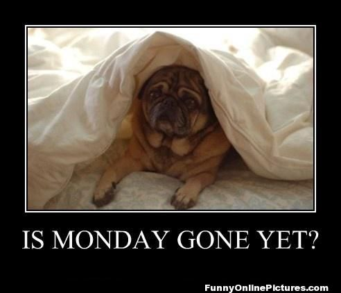 Monday Gone Yet - Funny Online Pictures