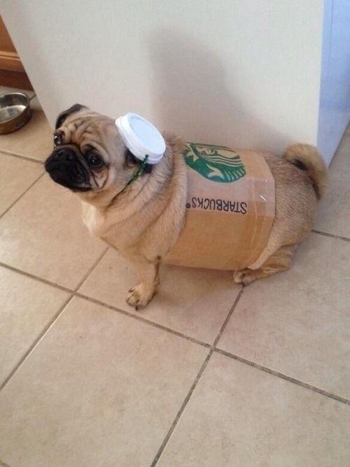 starbucks cup dog halloween costume