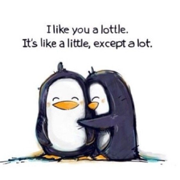 I Love You Like Funny Quotes : like you a lottle